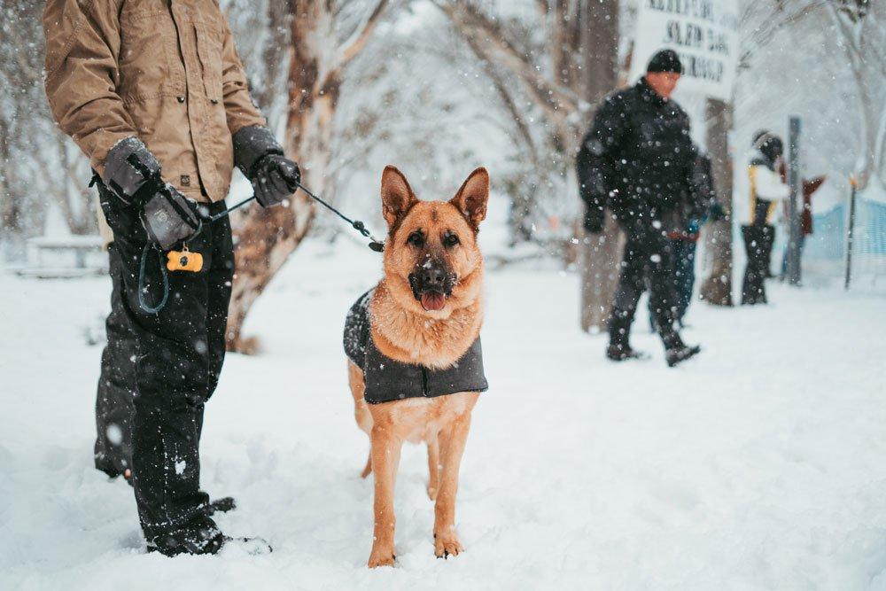 security canine